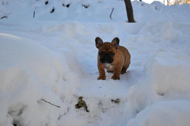Indios dans la neige
