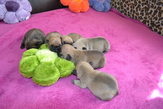 les 6 bébés