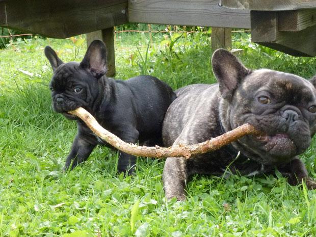 Horace & Jamy (Fred) des Landes du Marchairuz août 2012