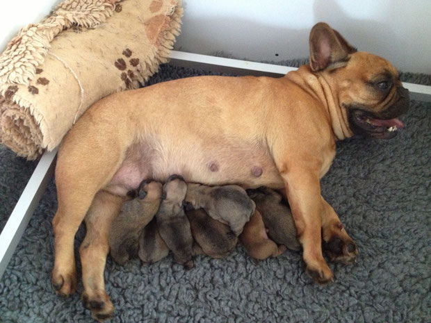 Charlotte et ses bébés, 8.11.2013