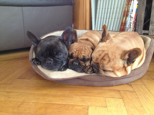 Aïdjan, Charlotte, Barney
