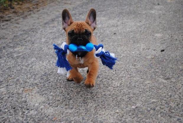 Burton très fier de son jouet :-)