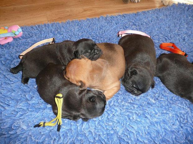 Hoya Bella (jaune), Hogan (beige),Heros (le seul fauve), Hestia (rose)