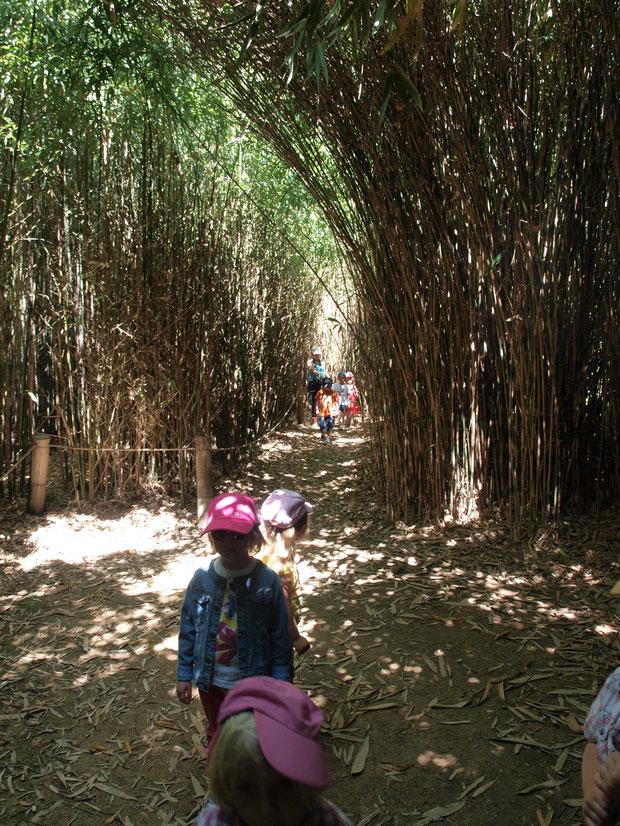 Passage dans le bosquet de Bambou-Parc Botanique de Haute Bretagne