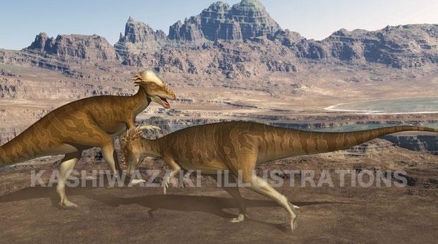 パキケファロサウルスが縄張り争いで頭を押し付けて戦っています