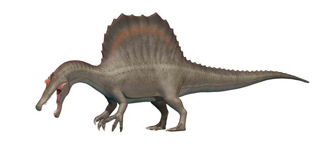 スピノサウルス側面図