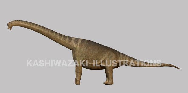 ブラキオサウルス側面