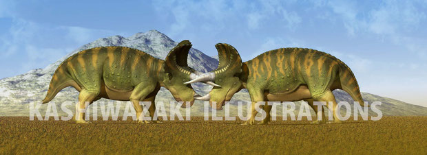 トリケラトプス同士の争い