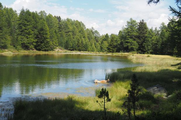 Breitmattensee, meer, hond, bergen,oen, bomen, bos, wandelen,