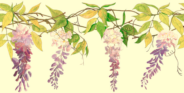 Wisteria in Cream colour, Contemporary Wallpaper Border by www.FiorentiniDesign.com