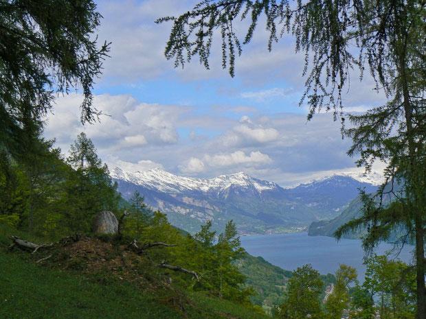 Hardergebiet (Brüggwald), Aussicht auf den Brienzersee
