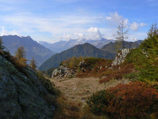 Heidelbeersträucher in der Nähe des Passes mit Blick in die Bergwelt