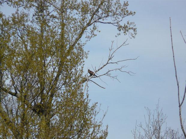 Milan beim Nest
