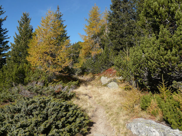 Von Sompréi zur Alpe di Chièra