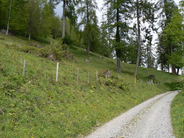 Hardergebiet; lichter Föhrenwald im oberen Teil des Gebietes