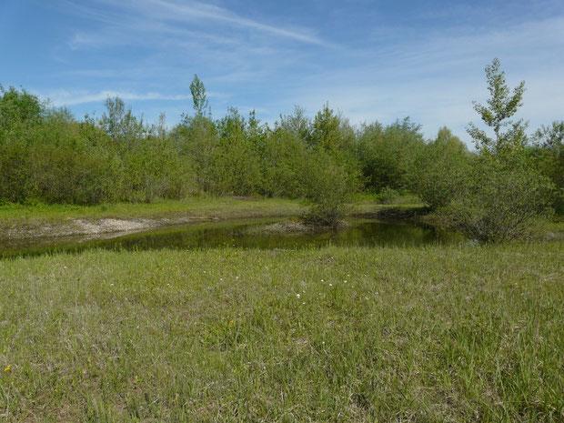 Maschwander Allmend bei Mühlau ZG (Moorlandschaft mit eingeschlossenem Weiher)
