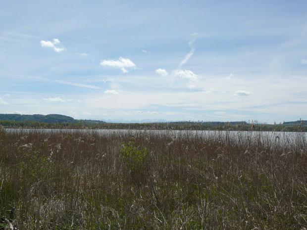 Naturschutzgebiet Cudrefin Lau Sauge Les Grèves VD