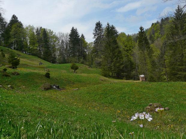 Breitfuesstobel beim Steinenbach