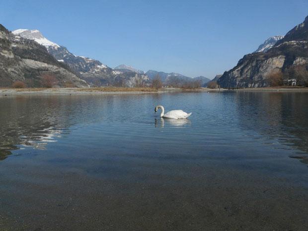 Im Hintergrund Nistplätze und Ruheinseln für Wasservögel