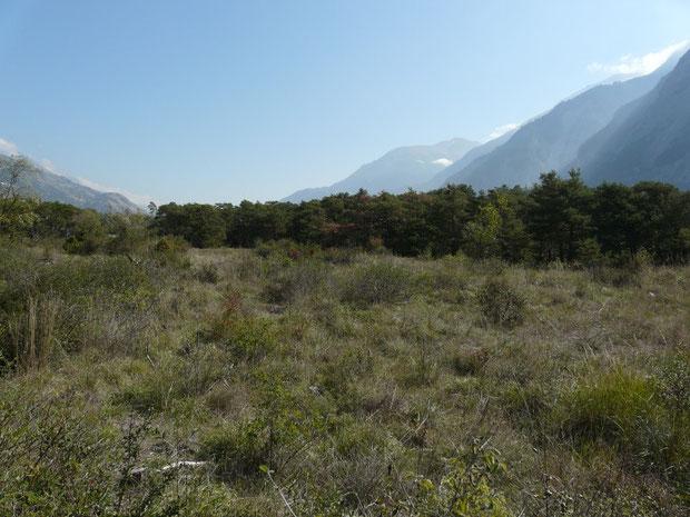 Der Pfynwald in der Nähe von Sierre
