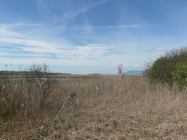 Naturschutzgebiet Cudrefin La Sauge Les Grèves VD