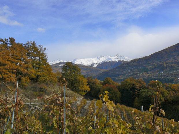 Weinkulturen im unteren Teil des Mont d'Orge