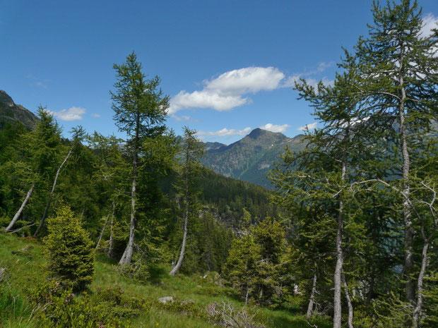 Von der Alp di Stabveder zur Alp di Rossiglion