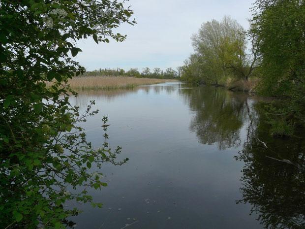 Naturschutzgebiet Gampelen La Sauge Fanel BE