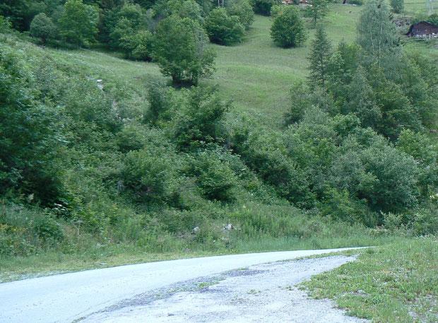 Beim Bahnhofausgang führt die Strasse unmittelbar ins Lötschental, wo sich verschiedene Laubbäume, aber auch Lärchen und blumenreiche Magerwiesen befinden.