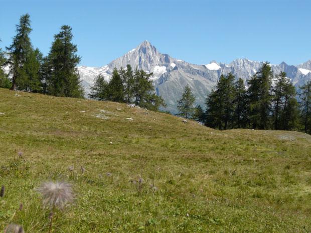 Blick von der Moosalp zum Bietschhorn