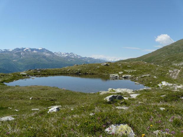 Moorgebiet mit alpinem Magerrasen