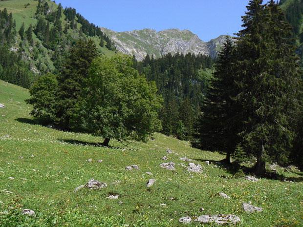 Aufstieg zur Alp Bounavau