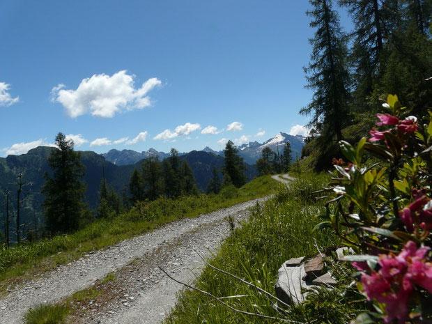 Wandersträsschen zur Alp di Stabveder