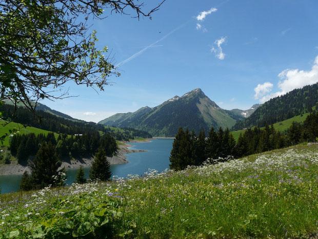 Hochstaudenfluren beim Lac de l'Hongrin