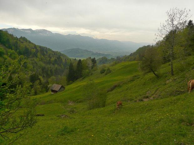 Rieden bei Zinggenberg beim Abstieg ins Breitfuesstobel