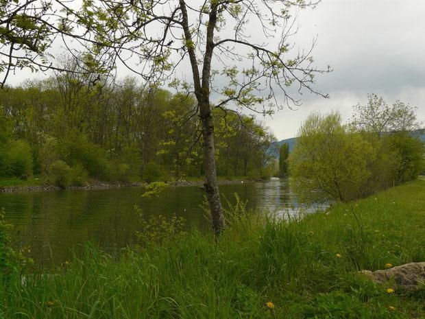 Naturschutzgebiet Haut-Vully La Sauge Les Grèves FR (Canal de la Broye)