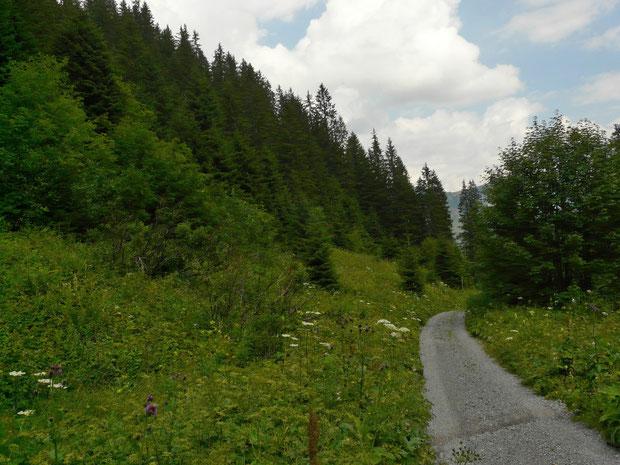 Diemtigtal, von Schwenden zur Grimmialp (Waldlichtung mit vielen Schmetterlingsarten)
