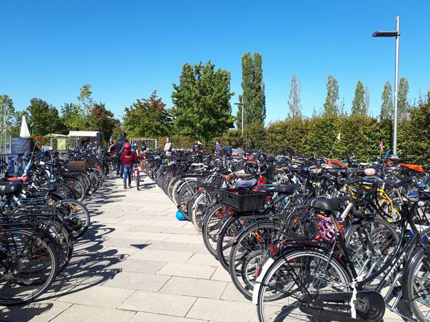 Umweltfest Potsdam BUGA Park