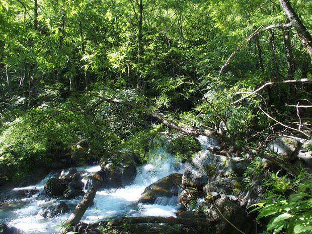 まもなく急流を横にして灌木の下を高度を上げていく。