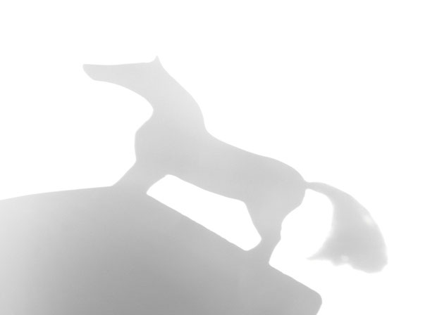 koń, czy sęk fot. Anna Gieracka