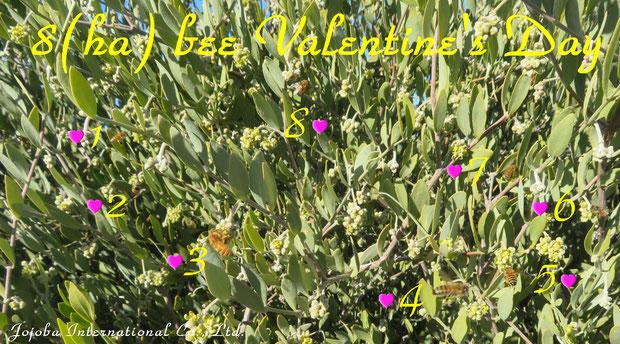 ♔ 8(ha) bee Valentine's Day ♪