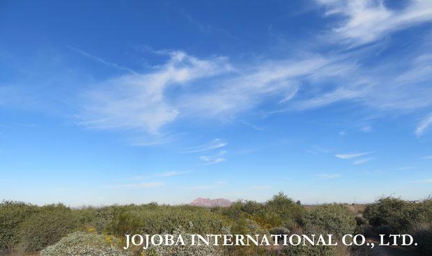 ♔ 原種ホホバ自生地アリゾナ州ハクアハラヴァレーの大空