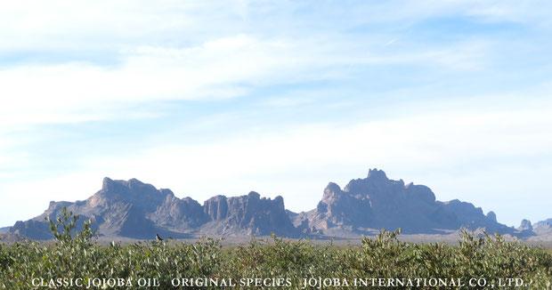 ♔ 原種ホホバとイーグルテールマウンテン 於: アリゾナ州ハクアハラヴァレー