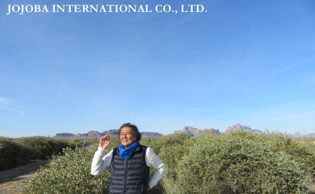 ♔ 私達のホホバオイルは、原種ホホバの聖地・政府の環境保護区域側のイーグルテール山の麓アリゾナ州ハクアハラヴァレー原産の原種ホホバです。世界遺産グランドキャニオンの自然浸食によって流れ来るコロラドリバーの豊富な天然ミネラル成分を含む灌漑用水と褐藻のオーガニック肥料で栽培しています。ハリウッドスターも内密で通ったと云われる温泉水・アクアカリエンテの美のマジック鉱泉で潤った高品質を誇るアリゾナ州原産砂漠の神秘の植物原種のゴールデンホホバオイルです。