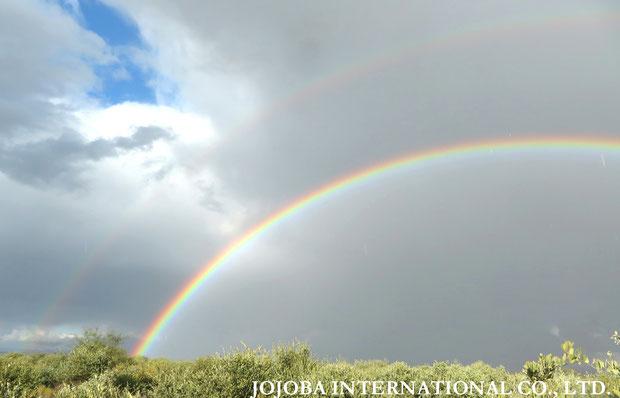♔ アリゾナ州ハクアハラヴァレー原種ホホバ農地のW虹🌈🌈