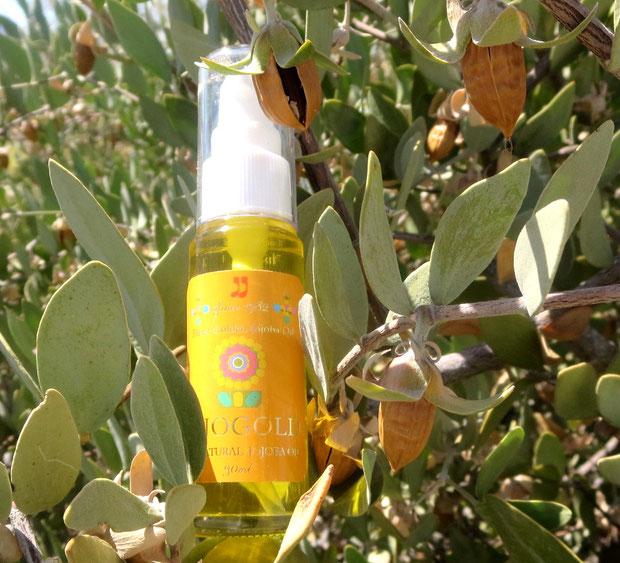 """♔ """"Mystic dew"""" - a golden Oasis for your skin. CLASSIC JOJOBA OIL """"JOJOGOLD"""" 美のマジック鉱泉で潤ったアリゾナ州アクアカリエンテ産ホホバオイル『ホホゴールド』は、自然の恵み一杯です。"""
