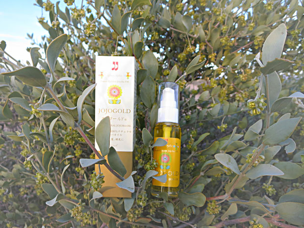 "♔ CLASSIC JOJOBA OIL ARIZONA JOJOGOLD ""Mystic dew"" - a golden Oasis for your skin. ネイティブホホバが太古より自生する地・原産国アリゾナ州原種ホホバの高純度原液100%一番搾り・新鮮ホホバオイルをお届け致します"