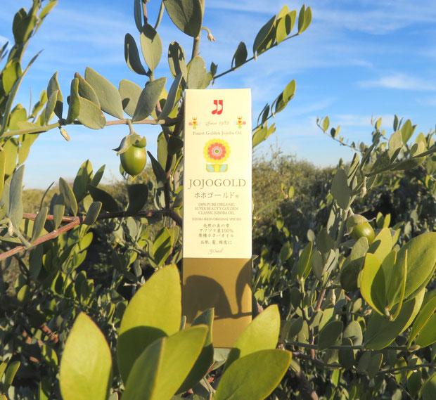 ♔ アリゾナ砂漠の神秘の植物 原種ホホバの美宝 100%ナチュラルホホバオイル『ホホゴールド』