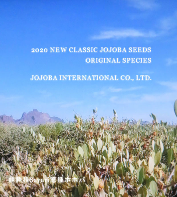 ♔ 2020 CLASSIC JOJOBA SEEDS ORIGINAL SPECIES ♥ 実りました