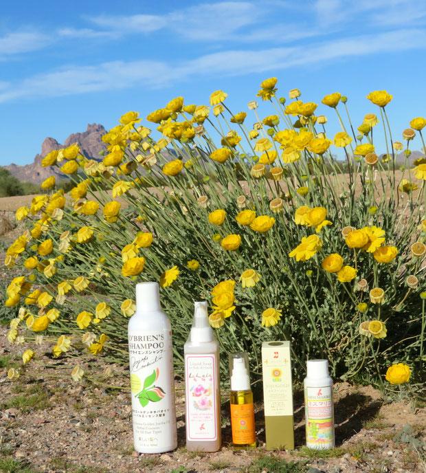 ♔ ホホバシリーズとDesert Marigold Native Wildflower イーグルテールマウンテンを臨んで